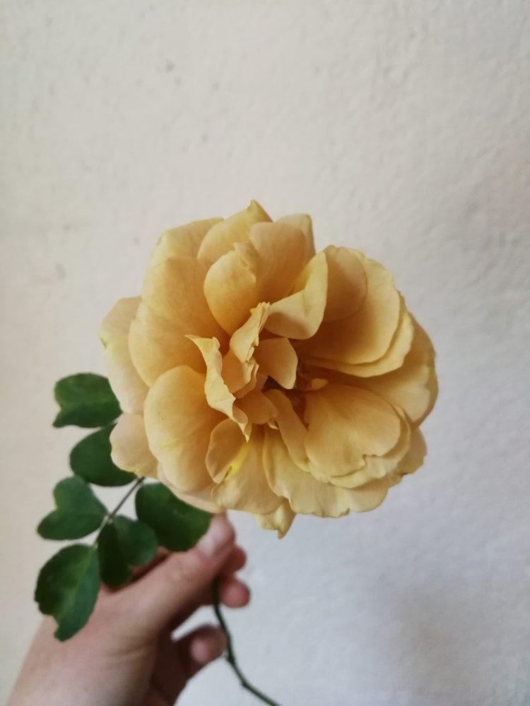 JaunePivoine-fleuristemariage-lyon160